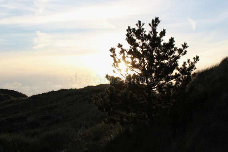 在日落的树风景 库存图片