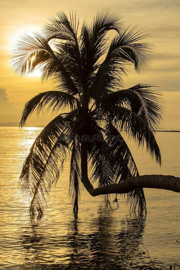 在日落的棕榈树剪影在热带海滩,海岛酸值Phangan,泰国 免版税库存图片