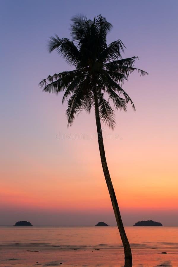 在日落的棕榈树剪影 图库摄影