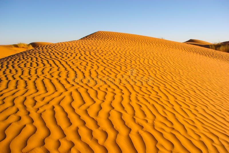 在日落的沙丘 免版税库存图片