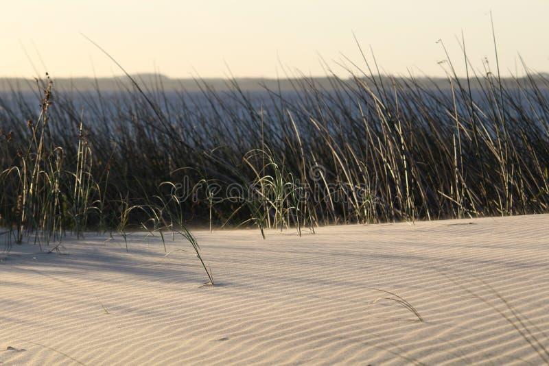 在日落的沿海场面与植物和美丽的湖 免版税图库摄影