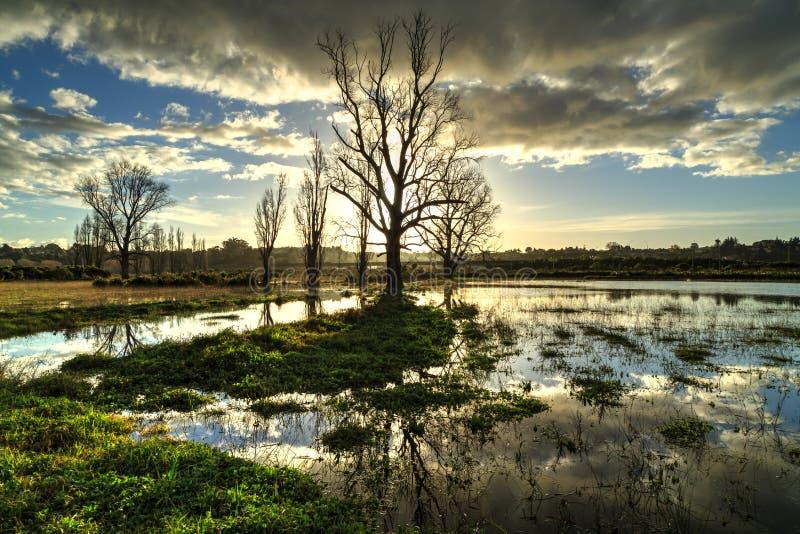 在日落的洪水区域,当树反映在水搅浊 库存照片