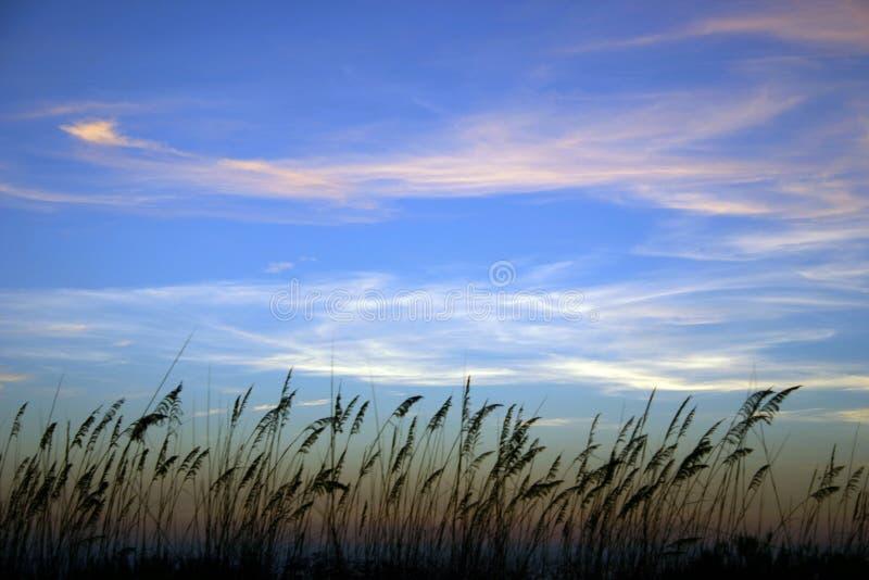 在日落的海燕麦与Whispy云彩 库存照片