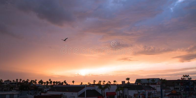 在日落的海鸥在新港海滨港口在南加利福尼亚美国 库存照片