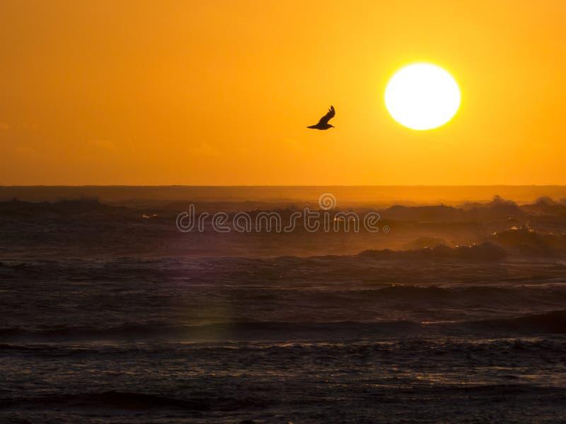 在日落的海鸥在海洋 免版税库存图片