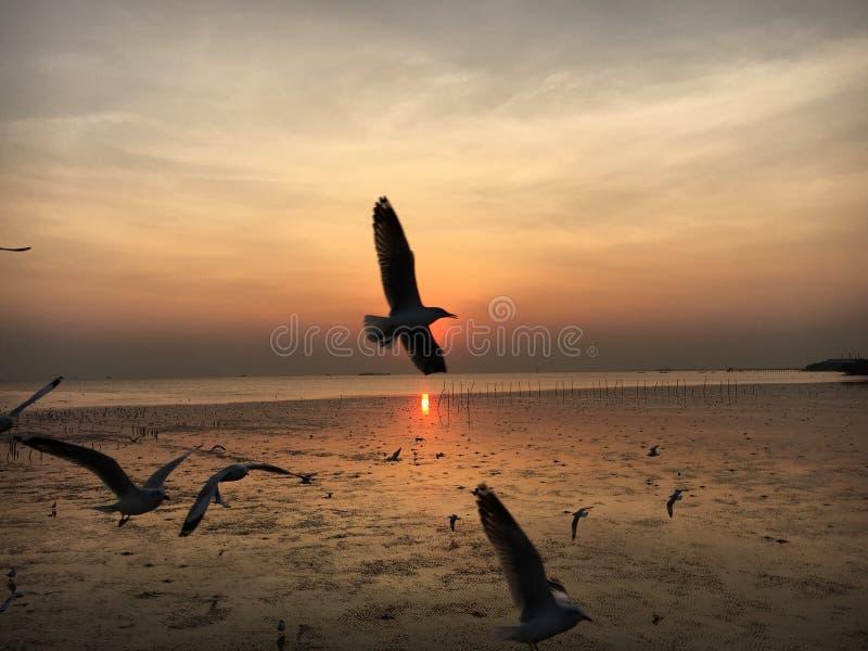 在日落的海鸥 免版税图库摄影