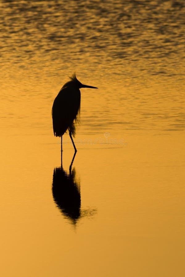 在日落的涉水鸟 库存照片