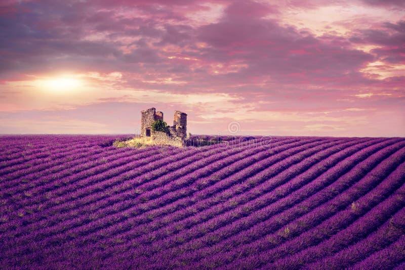 在日落的淡紫色领域 免版税库存图片