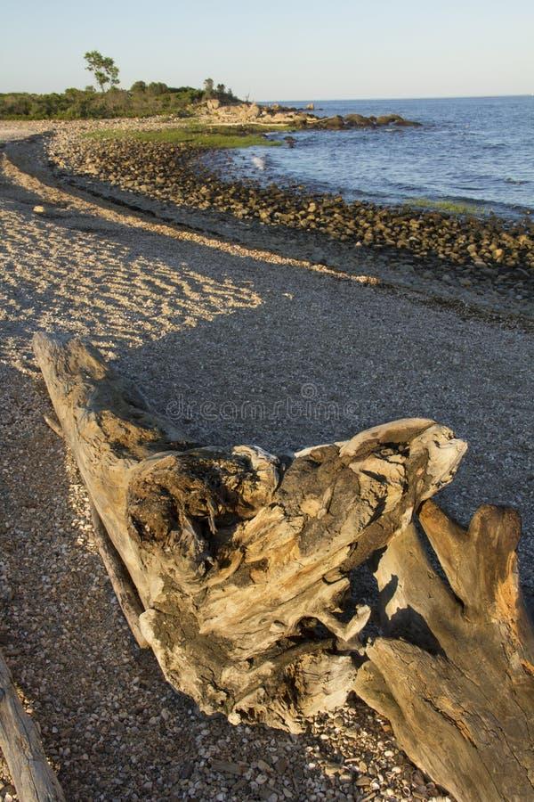 在日落的漂流木头在Hammonasset海滩,麦迪逊,康涅狄格 免版税图库摄影