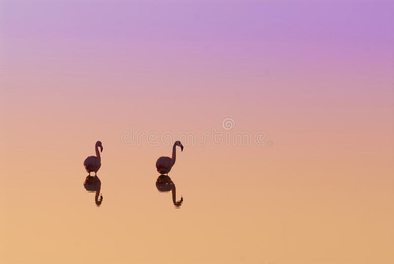 在日落的火鸟 潘庞 库存照片