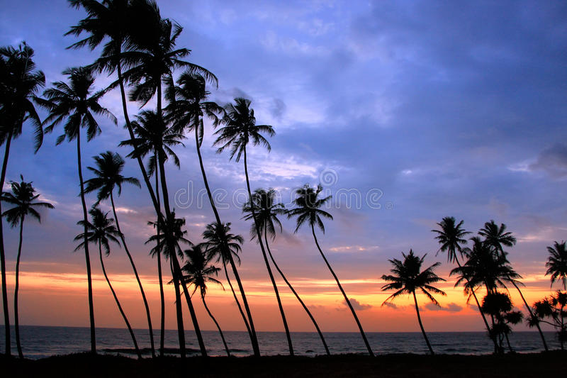 在日落的现出轮廓的棕榈树, Unawatuna,斯里兰卡 库存照片
