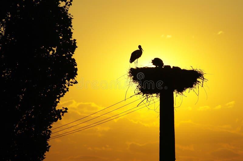 在日落的白色鹳巢 免版税库存照片