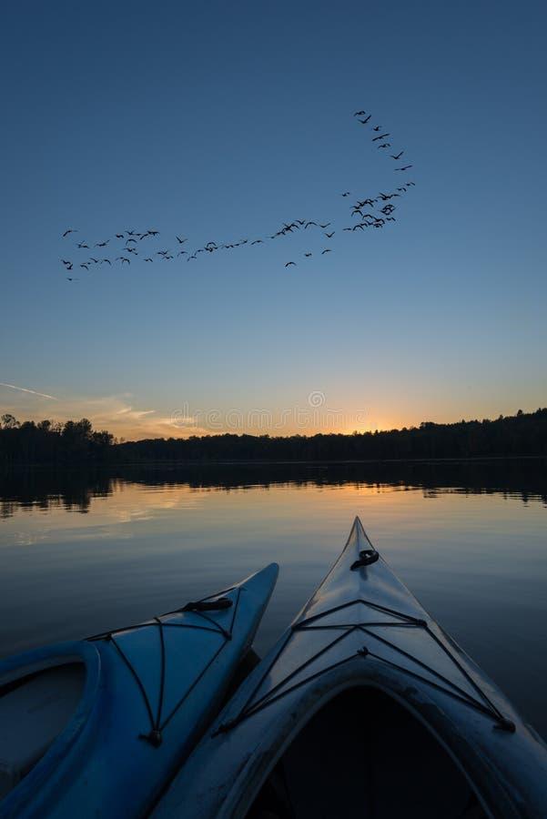 在日落的皮船与鹅群  库存照片