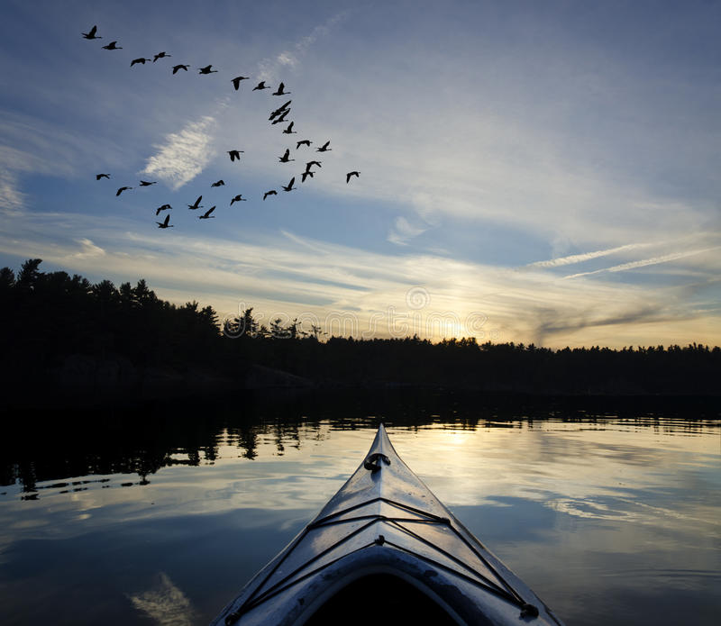 在日落的皮船和鹅 免版税库存照片