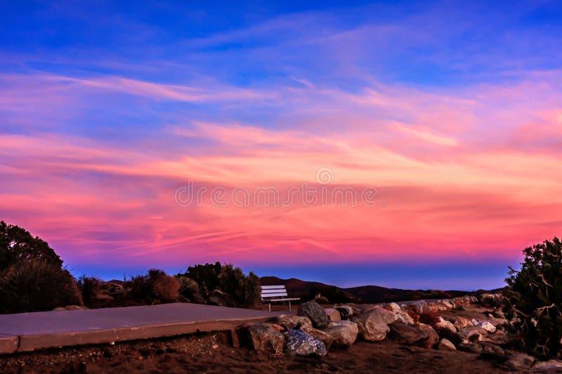 在日落的粉红颜色在约书亚树 免版税库存照片