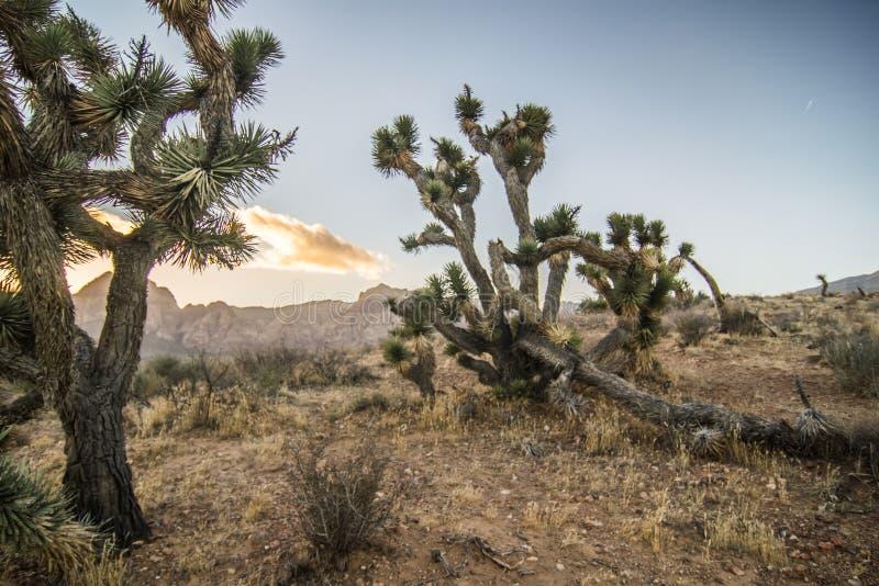 在日落的红色岩石峡谷拉斯维加斯和美国佬玩的贼好内华达 库存照片