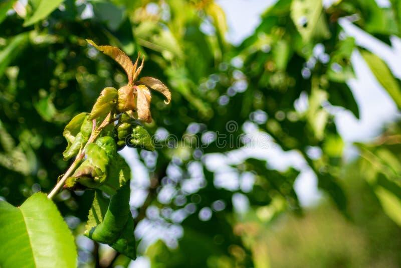 在日落的绿色黄色生叶的树枝 免版税库存图片