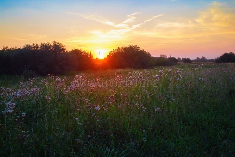 在日落的草甸 免版税库存照片