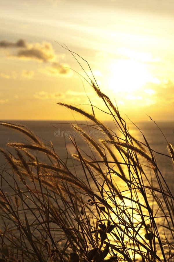 在日落的草 免版税库存照片