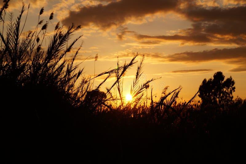 在日落的草 库存图片