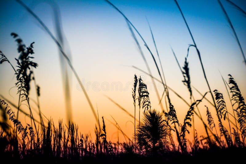 在日落的草 免版税库存图片