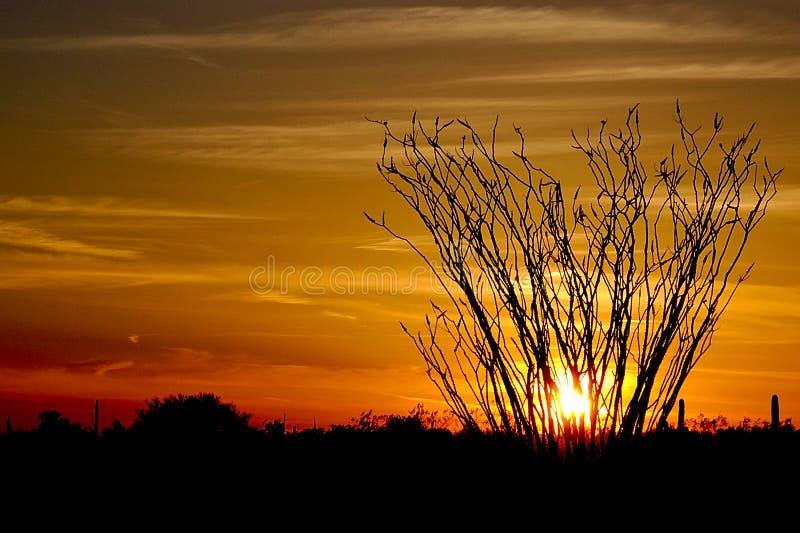 在日落的蜡烛木 库存照片