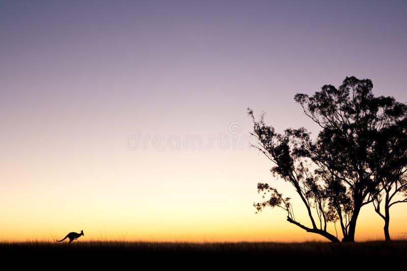 在日落的袋鼠剪影 免版税库存照片