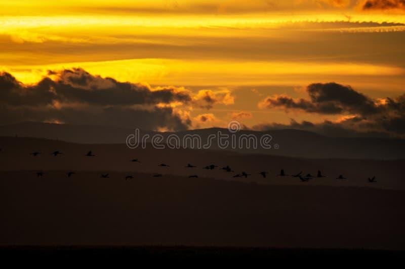 在日落的起重机迁移 图库摄影