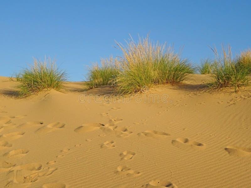 在日落的金黄沙丘 库存照片