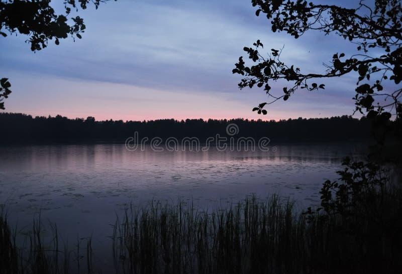 在日落的雨在湖岸 在海岸夏天农村风景的芦苇 免版税库存图片