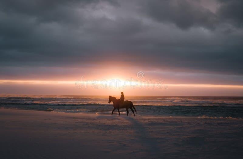 在日落的马骑术在海滩 免版税库存图片