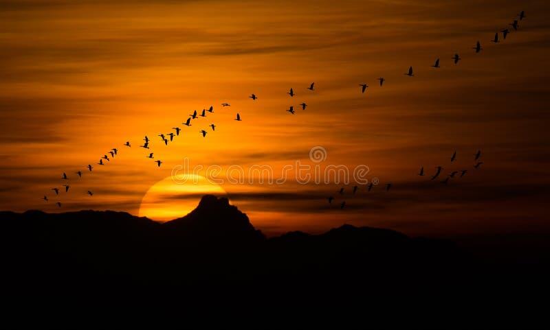 在日落的鸟类迁徙 免版税库存照片
