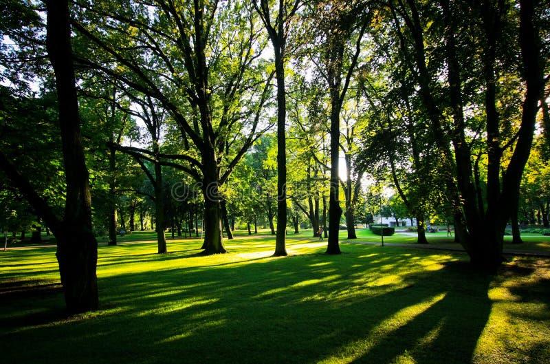 在日落的阴影在城市公园 库存图片