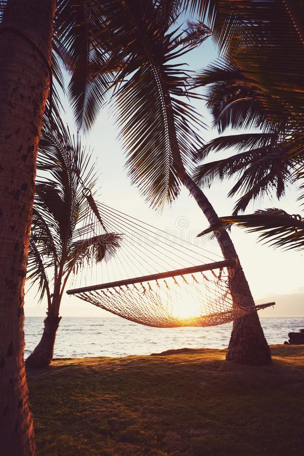 在日落的Tripical吊床 库存照片