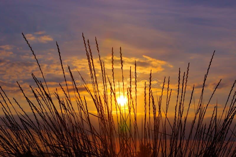 在日落背景的草 免版税库存照片