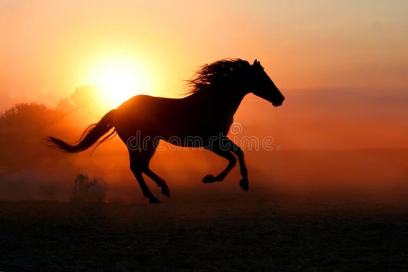 在日落背景的马 库存图片