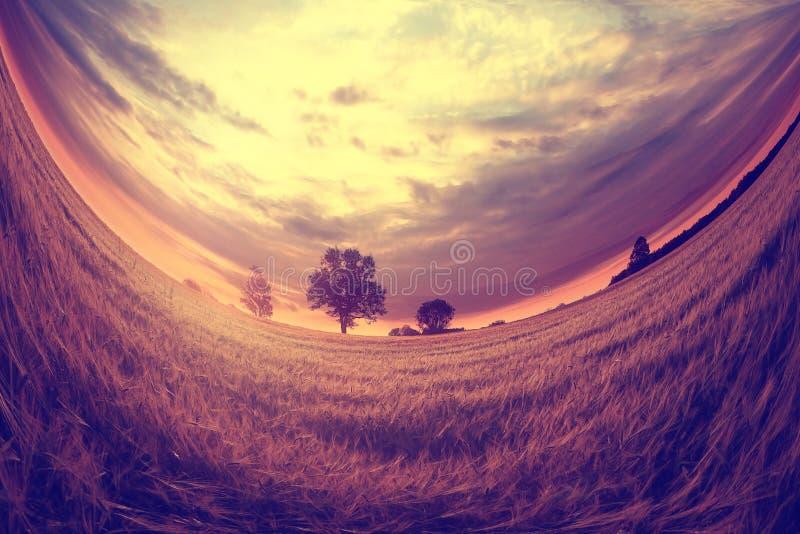 在日落麦田的风景 免版税库存图片