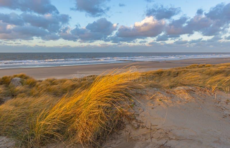 在日落,奥斯坦德,比利时的沙丘 免版税库存照片