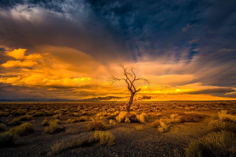 在日落Pyramid湖的孤立树 库存图片