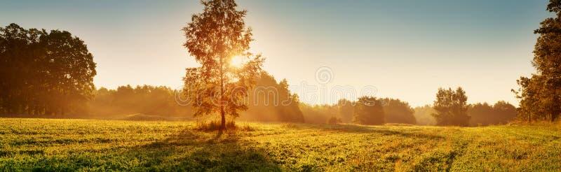 在早晨光的树叶子 库存照片