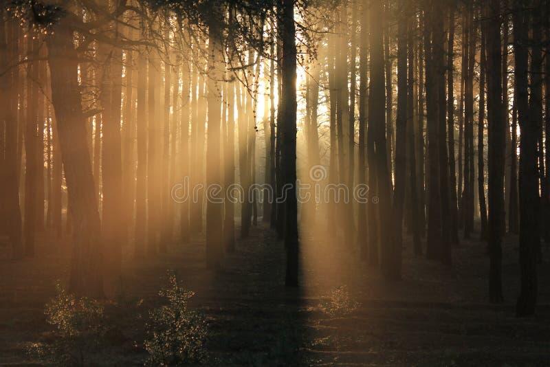 在早晨光芒 库存图片