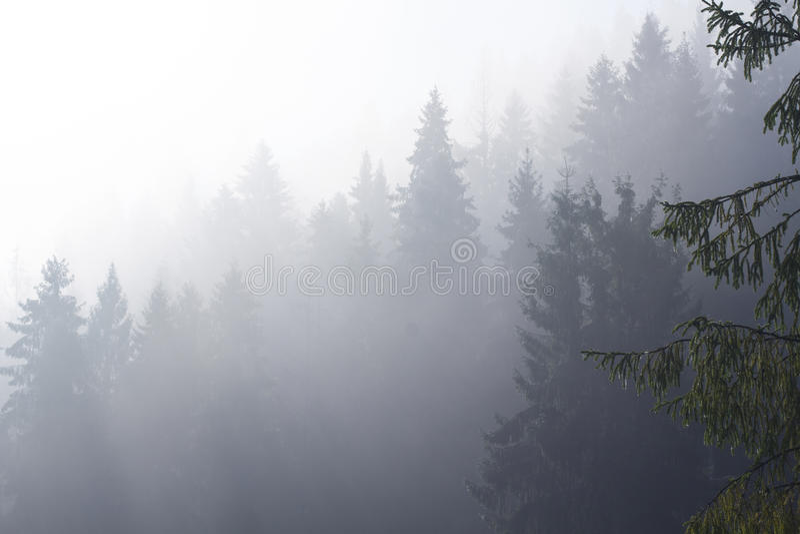 在早晨在森林的黎明薄雾山的 免版税库存图片