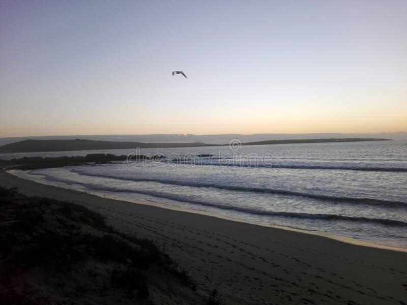 在早晨日出的海鸥在海滩 免版税库存图片