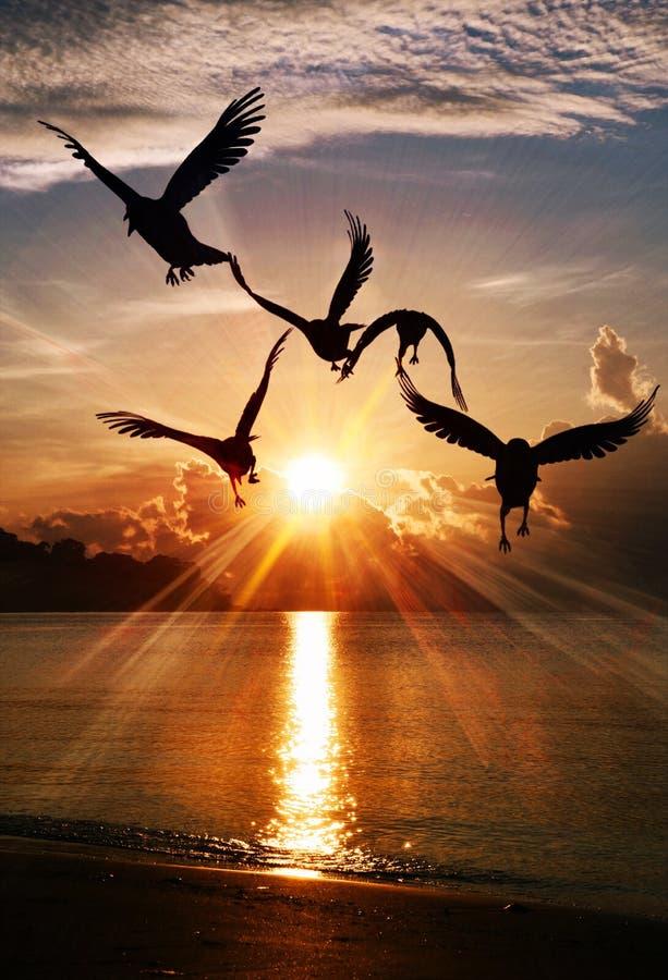 在早晨日出II的海鸥 免版税图库摄影