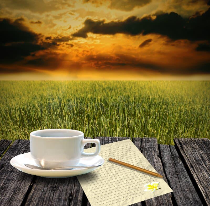 在早晨时间的米农场喝热的咖啡 免版税库存图片