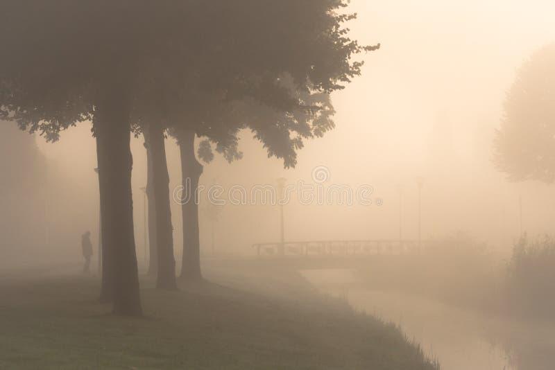 在早晨薄雾的剪影 库存照片