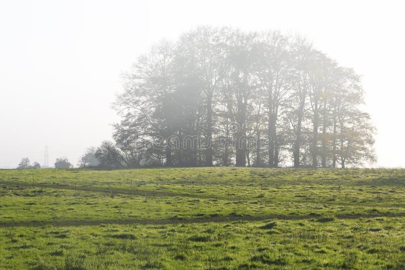 Download 在早晨薄雾的结构树 库存图片. 图片 包括有 叶子, 潮湿, 木头, 山坡, 平静, 小山, 秋天, 颜色 - 72367305