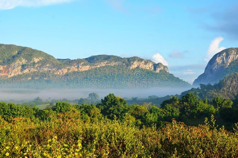 在早晨薄雾的Vinales谷,古巴 库存图片
