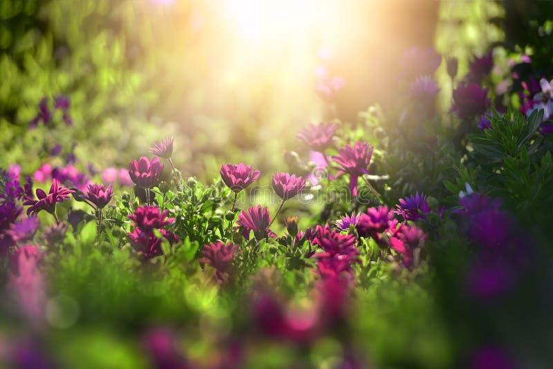 在早晨阳光背景的美丽的花 选择聚焦 免版税图库摄影