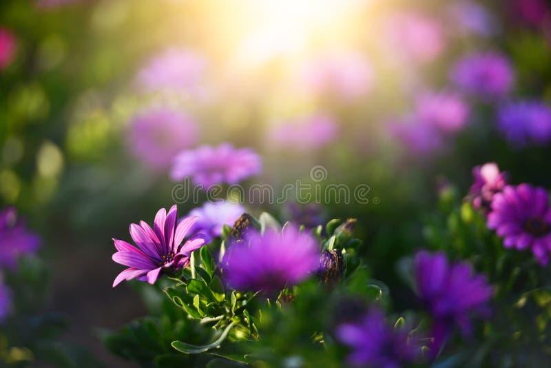 在早晨阳光背景的美丽的花 选择聚焦 免版税库存图片